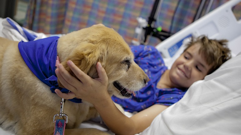 therapy dogs for children